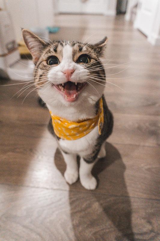Help Mijn Kat Plast op het Bed!