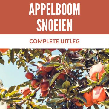 Appelboom snoeien: een complete uitleg