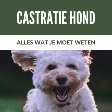 Castratie hond: Alles wat je moet weten