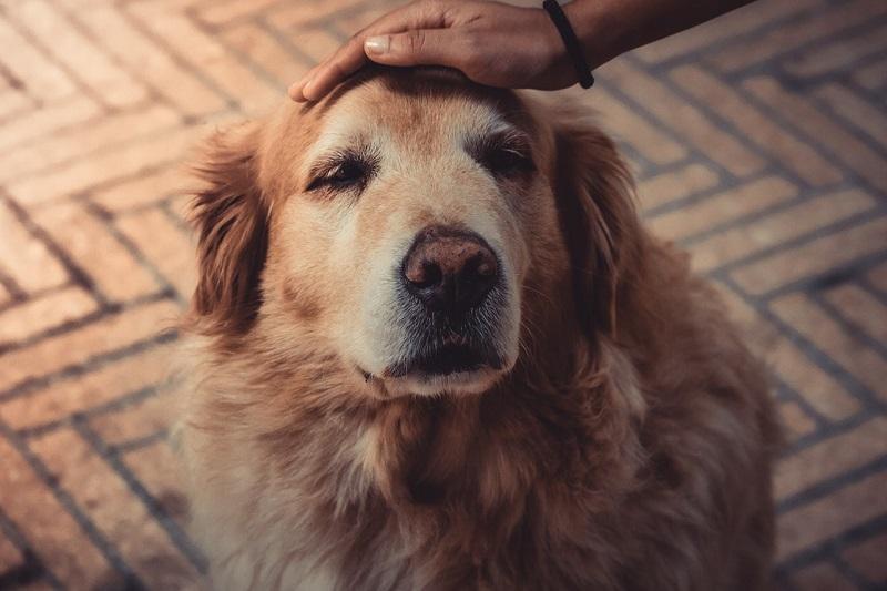 oude hond wil niet eten
