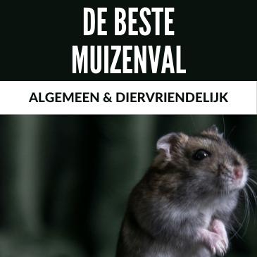 De Beste Muizenval: Algemeen en Diervriendelijk
