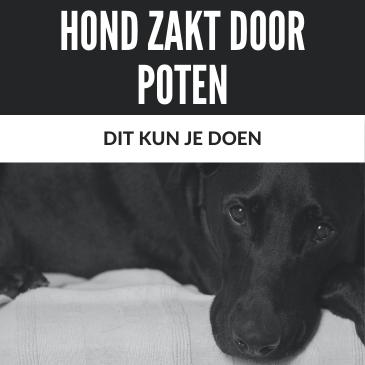 Hond Zakt Door Voor- of Achterpoten: Dit Kun je Doen