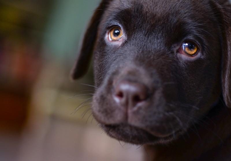hond zakt door voorpoten