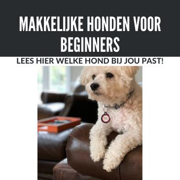 Top 9 : makkelijke hond voor beginners