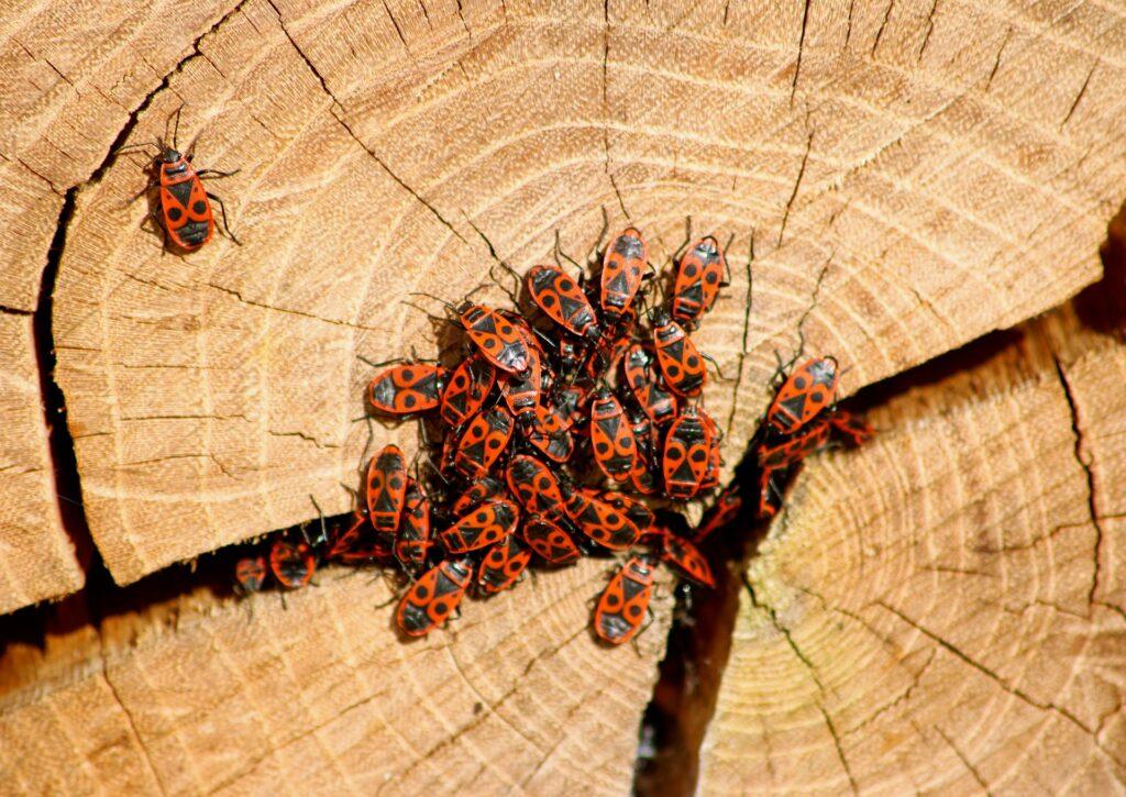 Vuurwantsen zonnebadend op een boomstronk